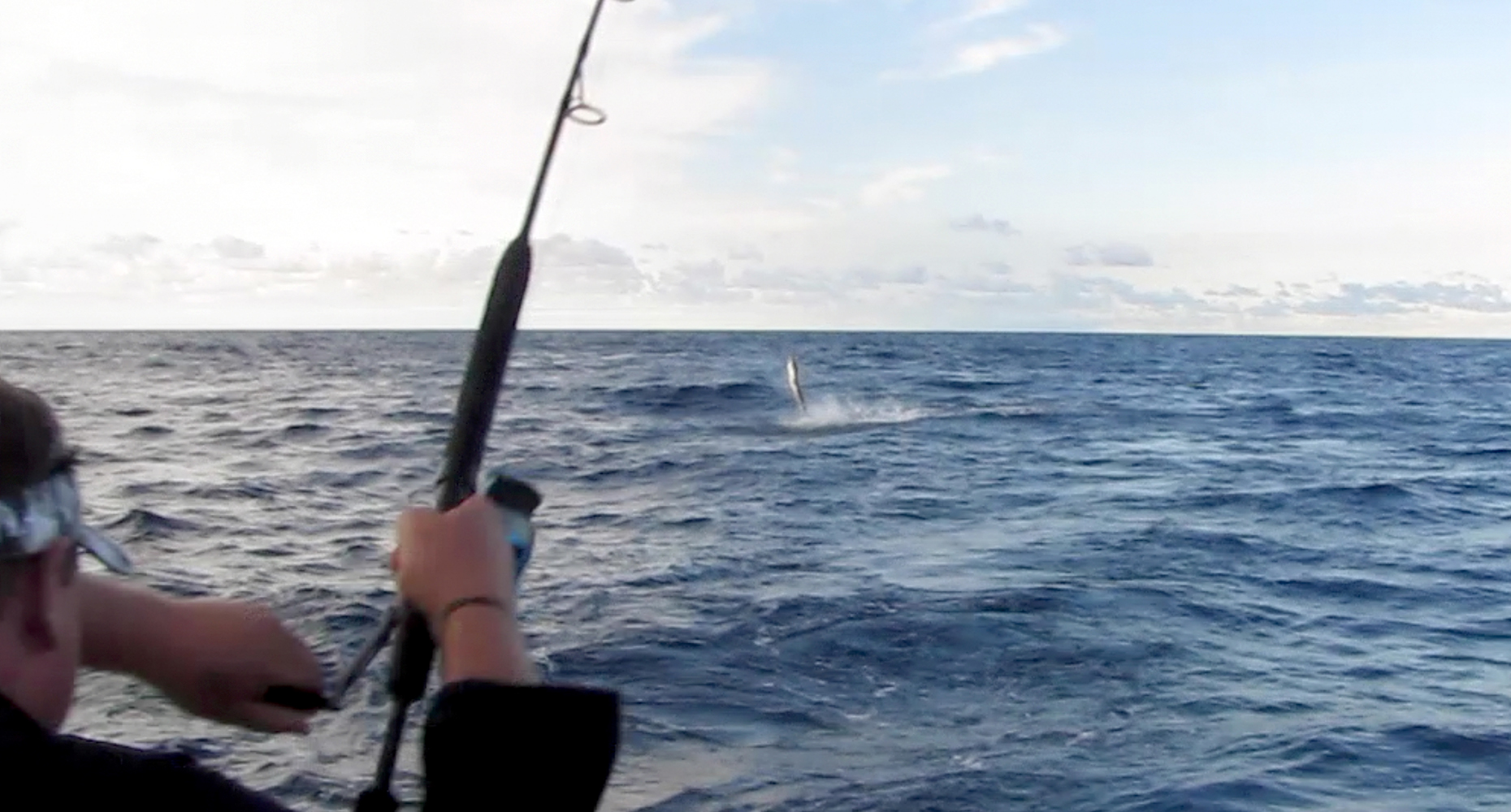 White Marlin Jumping